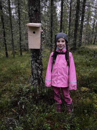 Fuglekassesnekring på Krokbua nov. 2020