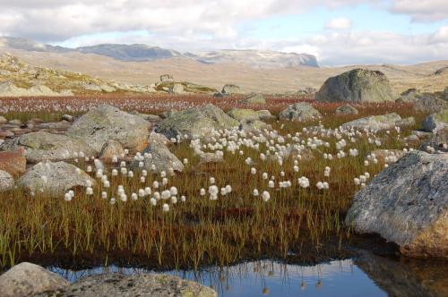 Flott høstdag på Hardangervidda.