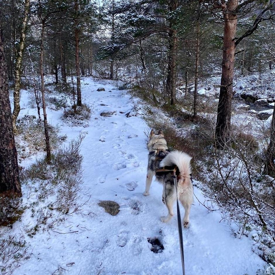 Stien inn til Skåpet fredag 10 januar.
