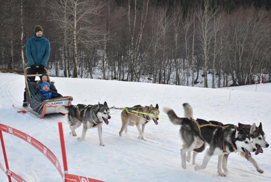 Hundesledekjøring i Bodø