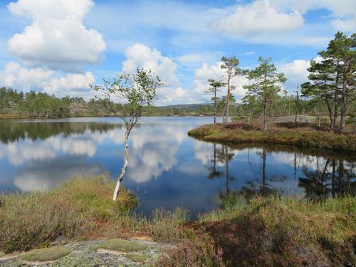 Frå onsdagstur til Breisåsen og Sandvatn i Nissedal 19.08.2020