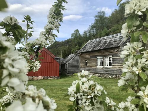 Blomstring i frukthistorisk hage i Vigatunet mai 2021