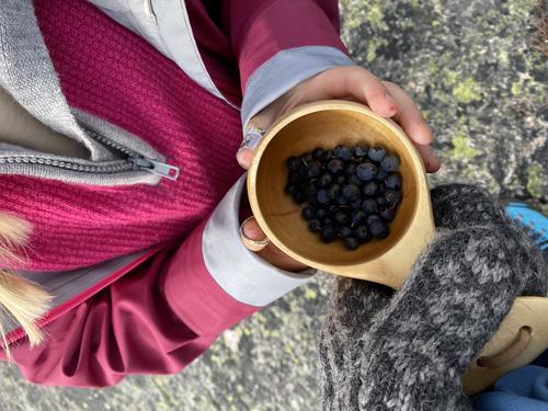 Blåbær ved Børsteinen i Sirdal i Oktober 2020.