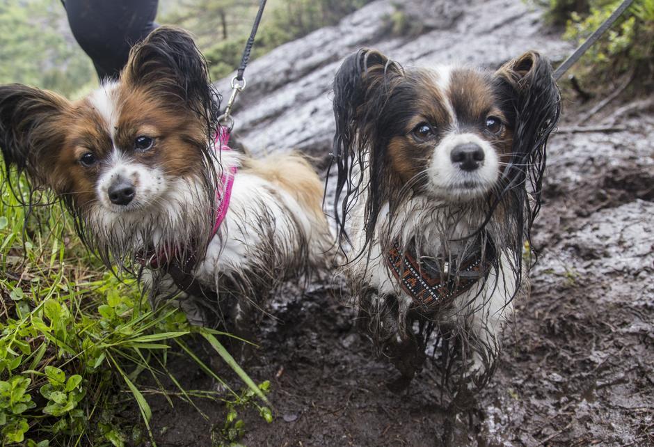 Ellis og Tiny startet dagen som to hvite hunder.