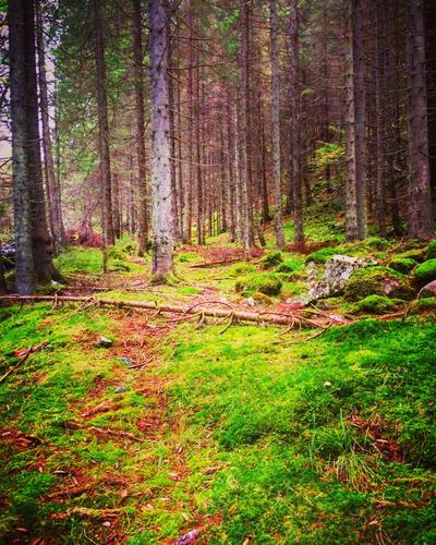 De dype skoger i Feiring, Akershus.