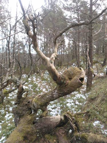 Trollskog i Hjortland