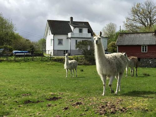 Lamaer Straumøy gård
