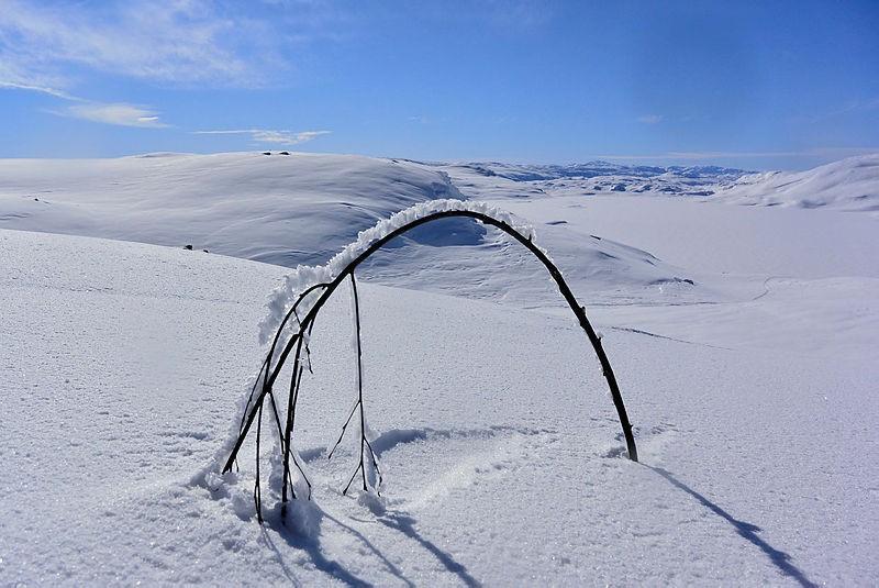Hjelp gjerne med å rette opp kvist som er bøyd ned av snø og is. Her fra Holmavatn på kvisteruta mot Haukeliseter Fjellstue.