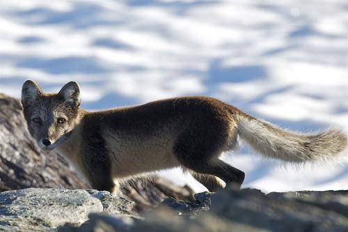 Naturmangfoldet i Norge betydelig redusert