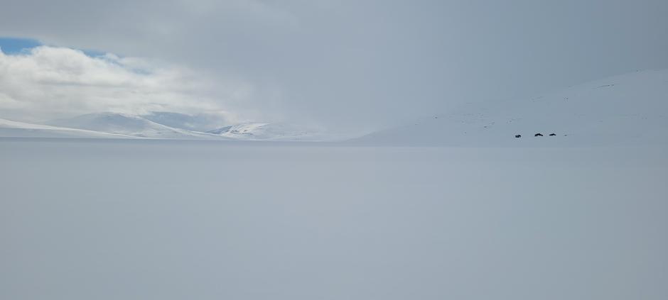 Hvitt ved Nordre Bjøllåvatn og Bjellåvasstua