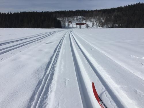 Skiforeningen prepper nydelig spor for oss.