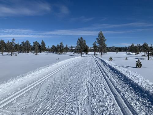 Føremelding uke 11: Ny flott skihelg i vente på Hedmarksvidda