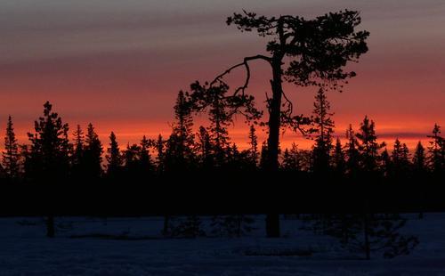 Natt i skogen
