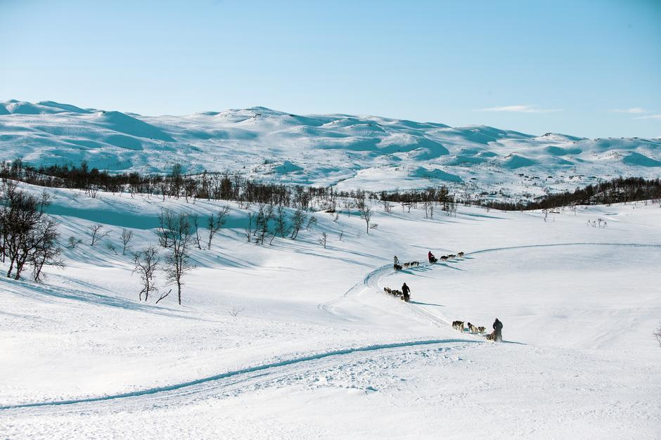 Haukeli Husky tilbyr rundtur, halvdagstur og heldagstur