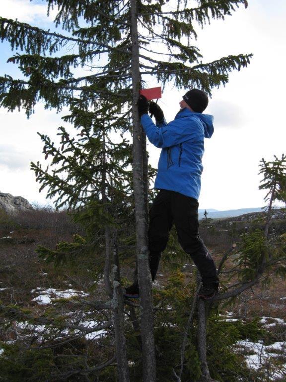 Kjell setter opp et fastmerke på toppen av bakken ovenfor vannet, retning sør for Åklivannet..