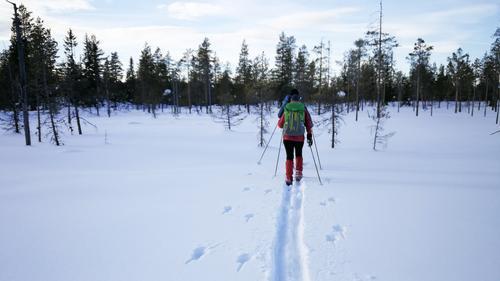 Skitur til Juskjølkoia i nydelig, flatt skiterreng