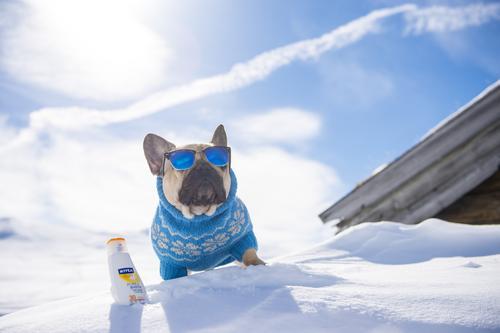 Hundekjøring hver helg i vinter
