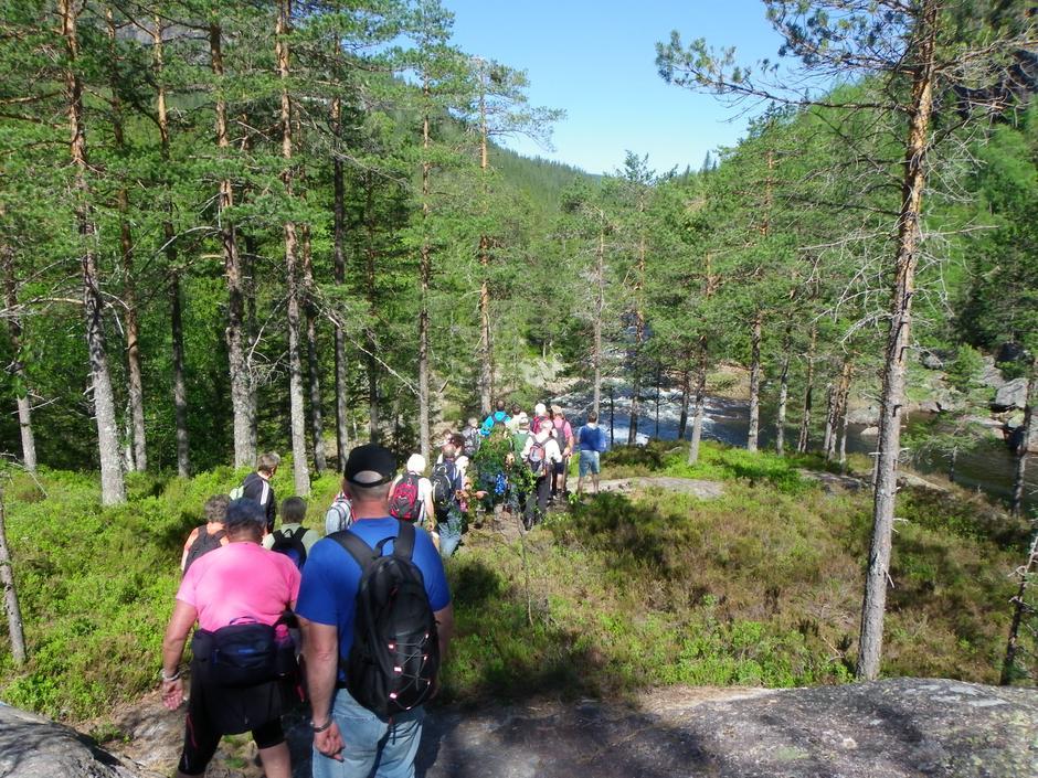 På rekke og rad gjennom skogen