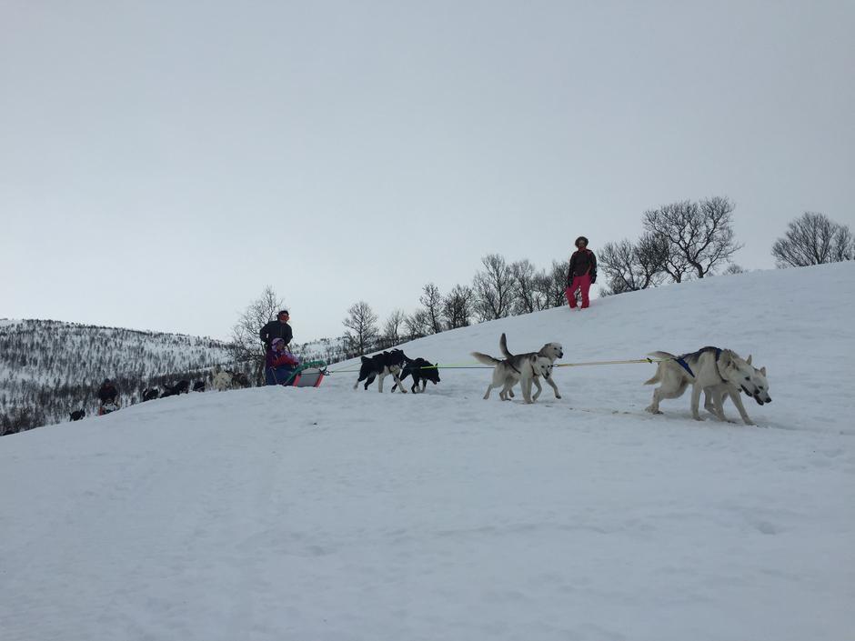 Hundekjøring med Haukeli Huskey i Tjønndalen