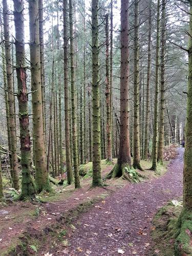 Stien går gjennom Tennebekkskogen