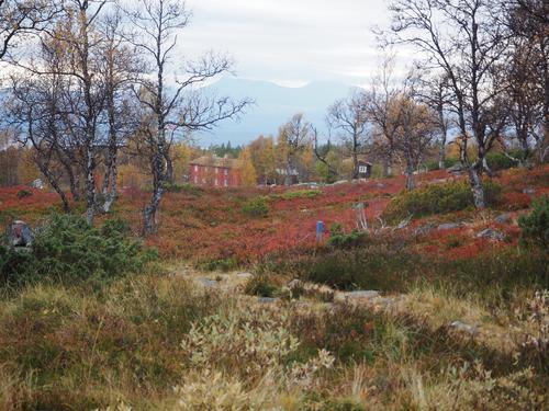 Høsten er den aller beste tiden på Svukuriset.