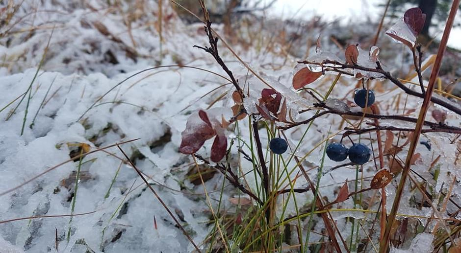 Blåbærhøst og vinter