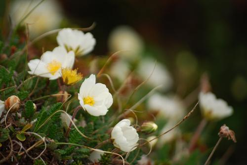 Lær mer om blomsterflora. Foto: Mari Kolbjørnsrud