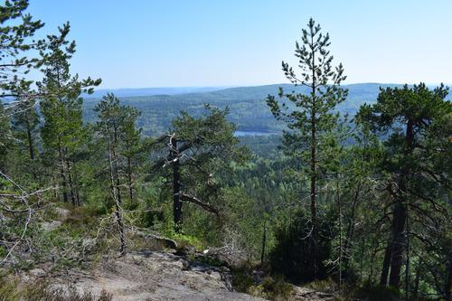 TURTIPS - i Vestfolds flotte natur