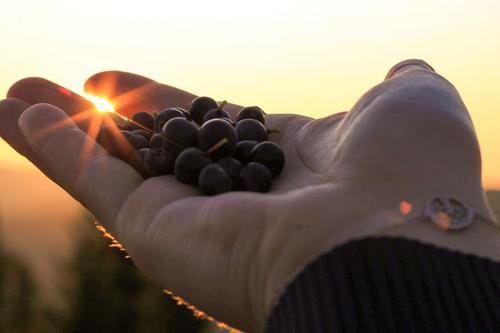 Sen blåbærtur i en vakker solnedgang i Knyken skisenter, Orkdal