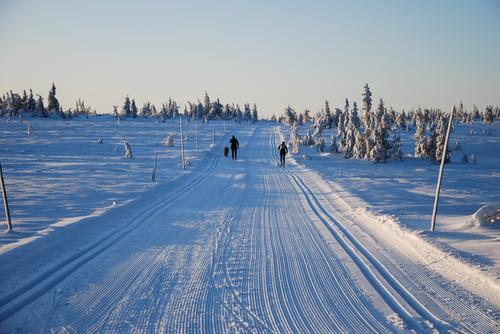 Nysnø gir fint skiføre på Hedmarksvidda i helga!