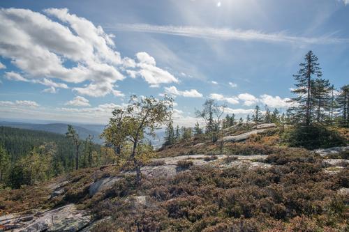 Utsikten fra Rundkollen er verdt turen