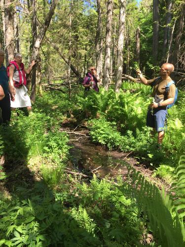 Skogstur med biolog søndag 31.05.