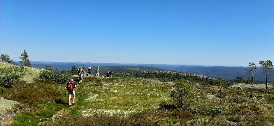 På Solhomfjell med Marishei, som er Gjerstads høyeste topp i bakgrunnen. Havranda ytterst.