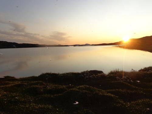 Mygg i solnedgang. Bleikarvatnet, Børgefjell.  Tre bilder fra sommerens tur, fra Saltfjellet til Steinkjer.
