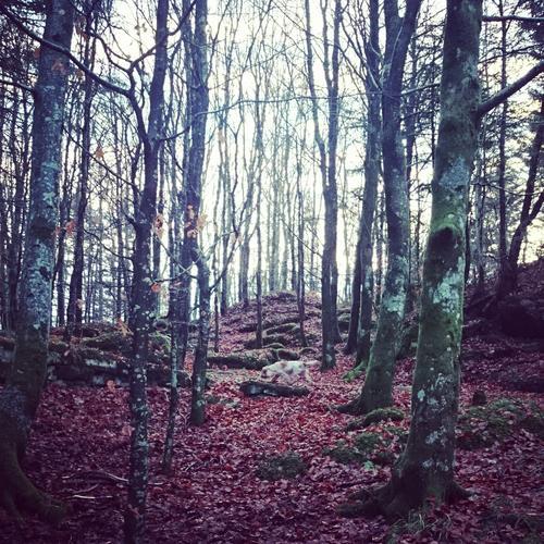 Alvøen skogen