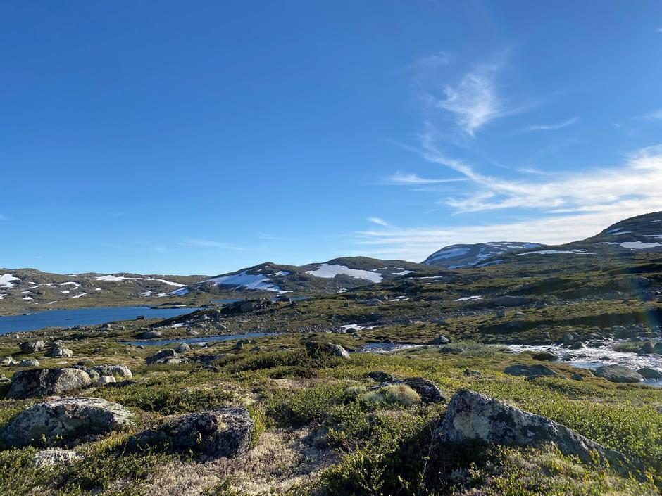 Rett og slett vakkert på Hardangervidda nå. Bildet er tatt 27. juni 2021på turen fra Finse til Krækkja.