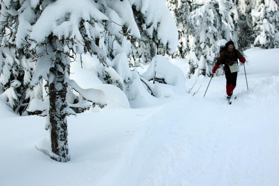 Nydelig snødekt skog