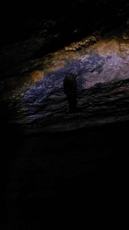 """Flaggermusa hadde funnet veien  inn og """"lagt""""seg for å sove helt til våren. Vi listet oss stille forbi."""