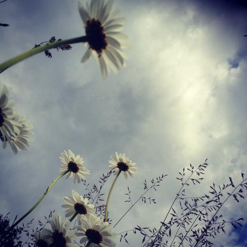 En hvil i blomsterengen 2