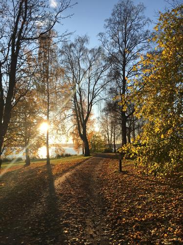 Høstdag på Domkirkeodden, Hamar.