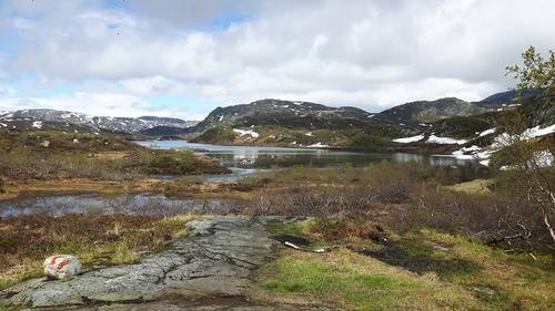 Føreforhold uke 23 Ryfylkeheiene barmark under 990 moh.
