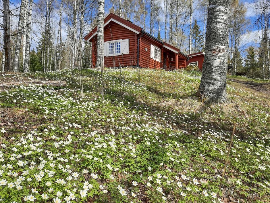 Spettehytta, koselig ubetjent hytte på Sæteren Gård.
