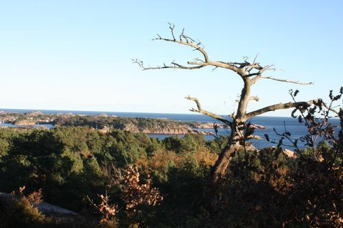 Havutsikt på Marivold mot Hesnesøyene