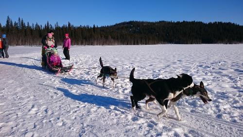 Hundekjøring på Skumsjøen, 14. Februar