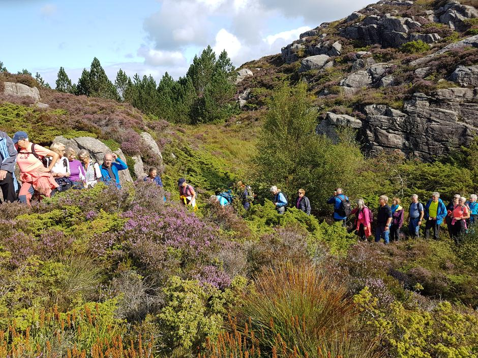 Lang rekkje  med seniorar på den lengste løypa på Lokøyna.