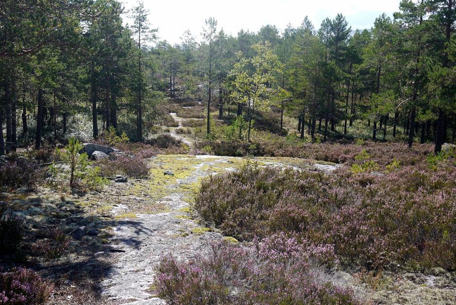 Rideveien Eidal - Prestfoss