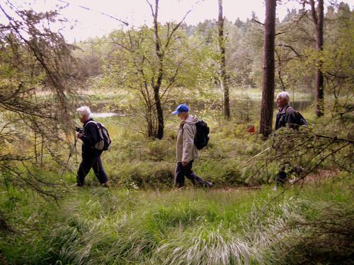 Rusletur i Njåskogen