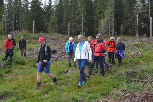 Skogstur i Søre Ål