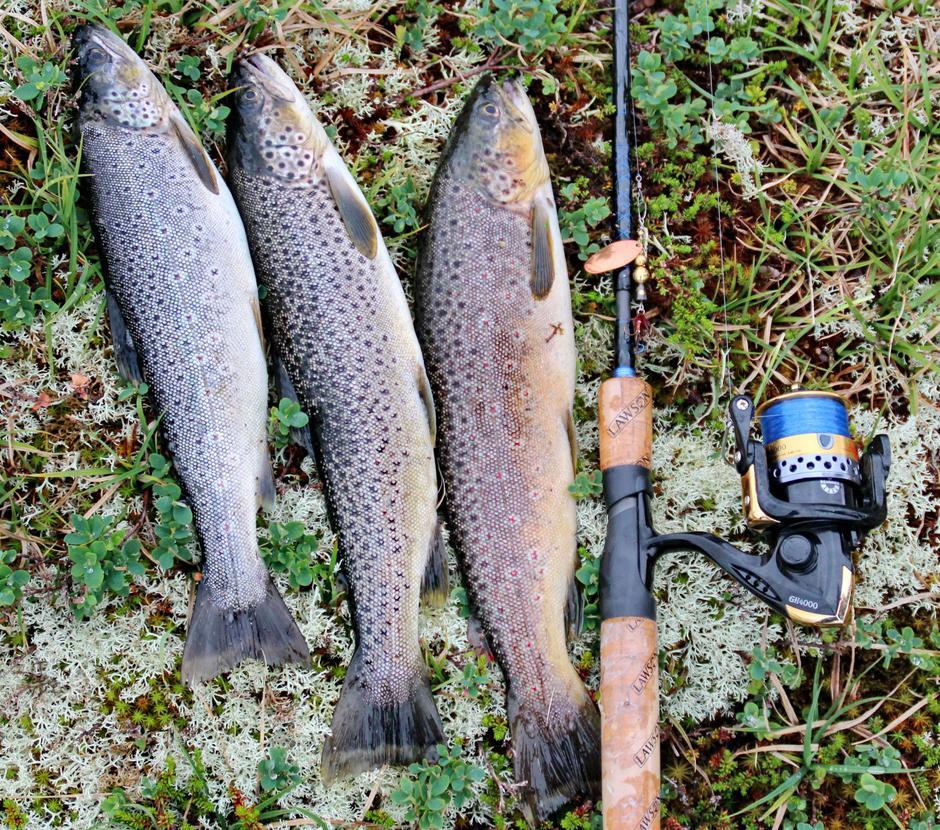 Det er vanlig med fisk opp mot kiloet i Vassøyane ved Selhamar turisthytte.
