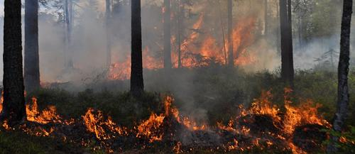 Stor skogbrannfare